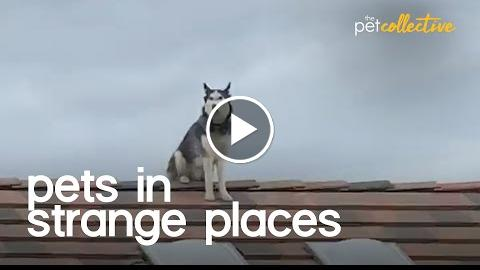Pets In Strange Places