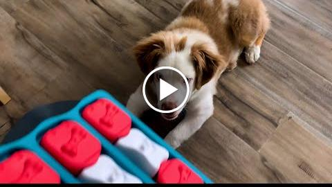 Using a Food Puzzle to Entertain a Bored Dog