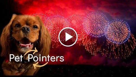 Fireworks Safety | Pet Pointers